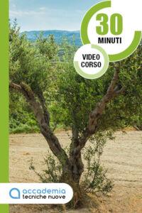 La Potatura olivo vaso policonico V