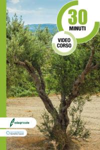 Potatura olivo vaso policonico V Edagricole